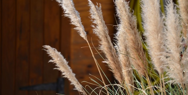 Care-free perennials: Ornamental grasses for any location