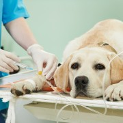 Pet health advice every animal lover should know