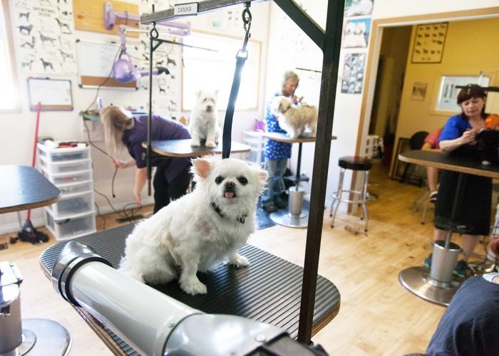 Western Dog Grooming School