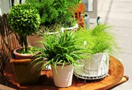 Creativity in container gardens