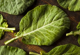 5 main classes of phytochemical compounds you should know