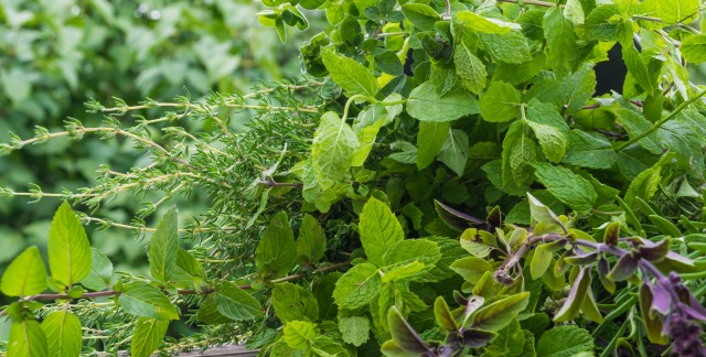 How to design your own medicinal and aromatic herb garden