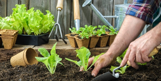 Simple ways to design and plant a garden for less