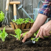 Smart tips for growing uncommon vegetables