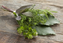 Harvesting and drying garden herbs