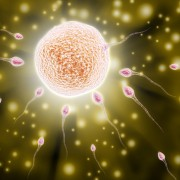 Fertility issues: is there a cure for zero sperm count?