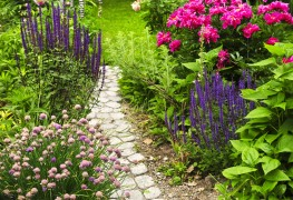 6 green thumb tips for growing perennials