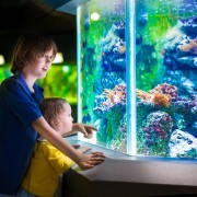 4 easy steps to empty a fish tank with a siphon