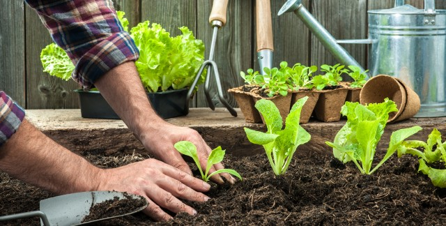 Gardening 101: using compost in your garden