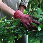 Tips for gardening in acidic soil