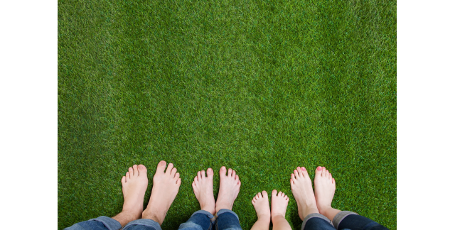 The ultimate guide for maintaining a perfect lawn