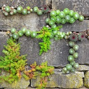 4 ideas for growing a garden on a wall