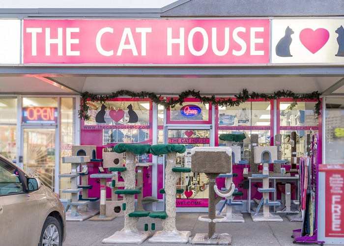 the cat house inc calgary business story