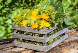 3 good reasons to grow yarrow