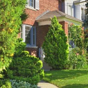 5 guidelines for choosing the perfect place for a landscape tree