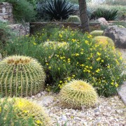 5 hot ideas for planting in desert conditions