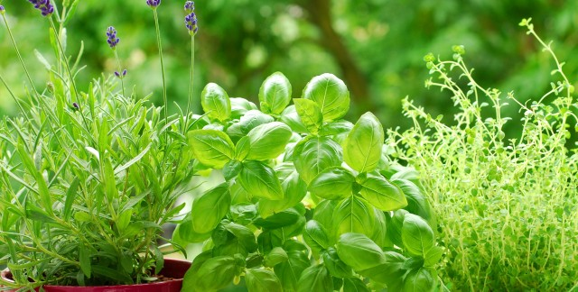 6 recipes to get you using your garden herbs