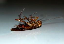 3 homemade repellants to keep pests at bay