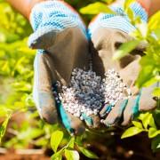 6 key tips for fertilizing your garden with nitrogen