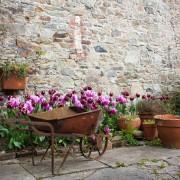 6 ways to beautify your backyard