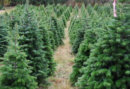 Ways to fight 6 common evergreen pests & diseases