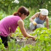 7 options for labelling your garden