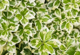 7 pointers for planting ground covers