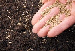 Tips to sow seeds using household items