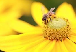 Attracting beneficial insects to your garden