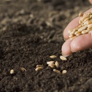9 tips for sowing seeds in the garden