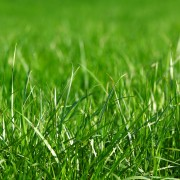 Guide to getting the right lawn grass for your yard