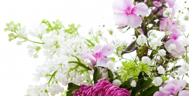 Low-maintenance tips for growing garden phlox