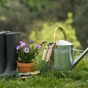 The beginner's guide to planting an organic garden
