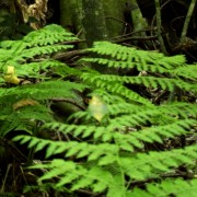 Suggestions for growing healthy and happy ferns