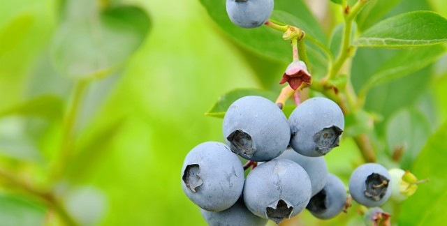 How to care for fruit-bearing plants