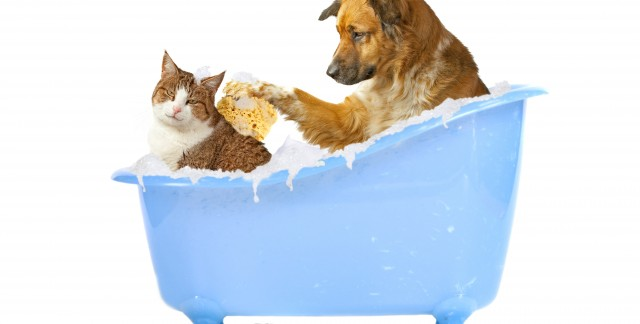 A quick guide to pet shampoo and massage