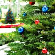Should I choose a real or artificial Christmas tree?
