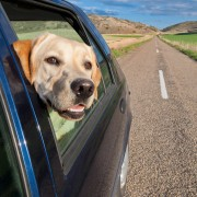 Smooth roads ahead: ensure a stress-free trip with your pet