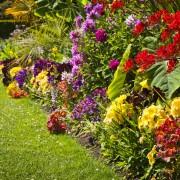 Easy Fixes for Garden Annoyances