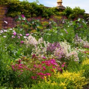 How to plan and plant a herbaceous border
