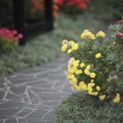 Your guide to designing a beautiful garden