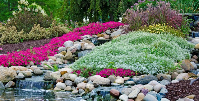How to plant a rock garden and illuminate garden features