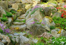 Care-free groundcovers