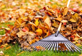 9 ways to deal with autumn leaves