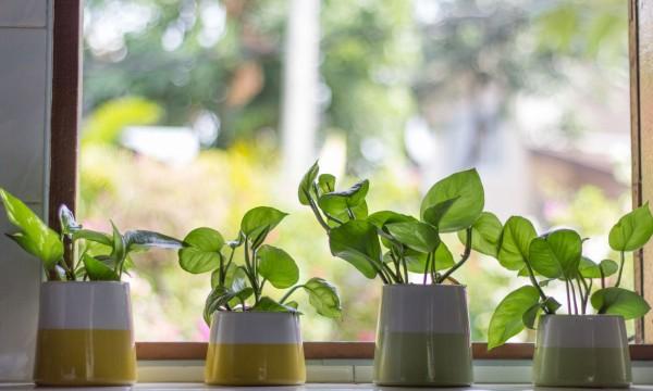 top 5 des plantes avoir en appartement intercom magazine. Black Bedroom Furniture Sets. Home Design Ideas