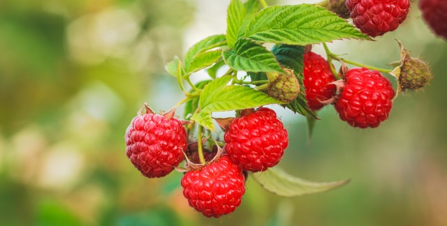 How to find berries in the city