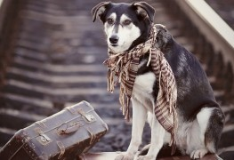 Top tips for a successful, stress-free move with your pet