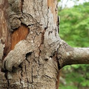 Must-know advice for effectively treating your sick tree