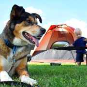 Fun with Fido: share the joy of camping by bringing your dog