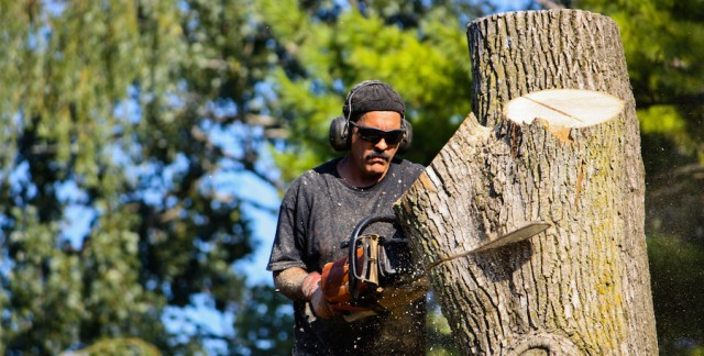 Top tips to ensure you find and hire a first-rate arborist